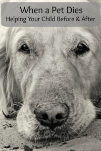 Close-up portrait of golden retriever dog with sad eyes at the park in summer